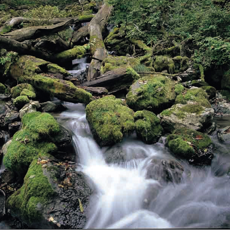 日本三大激流の一つ、球磨川の最上流に蔵元は点在する