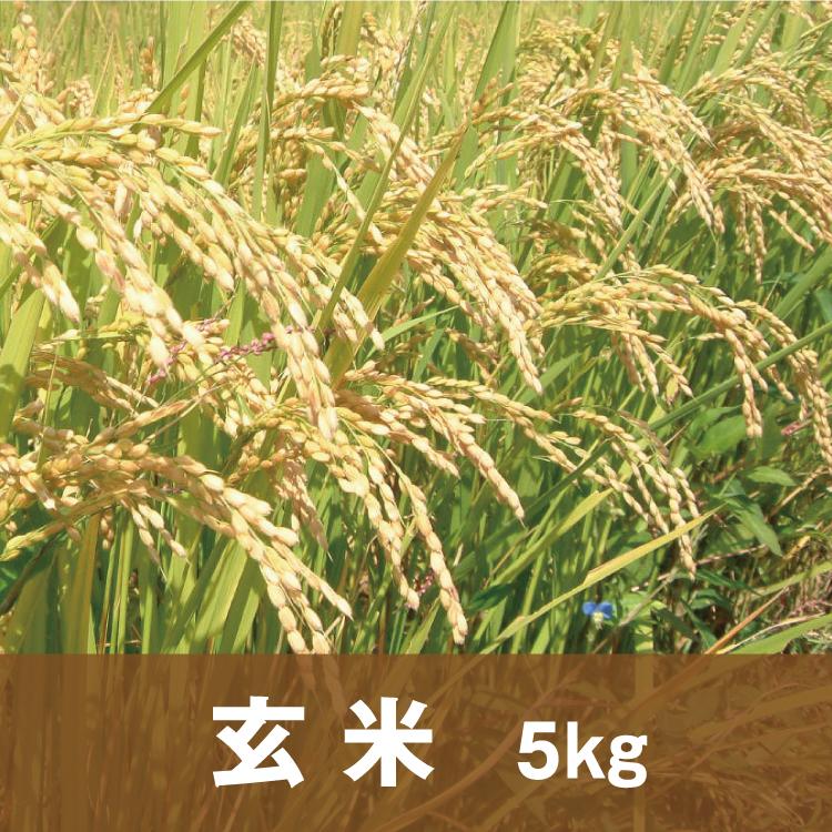 自然純米【玄米】5キロ