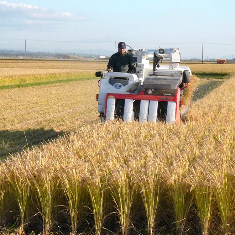 毎年収穫を楽しみにしている固定ファンも多い