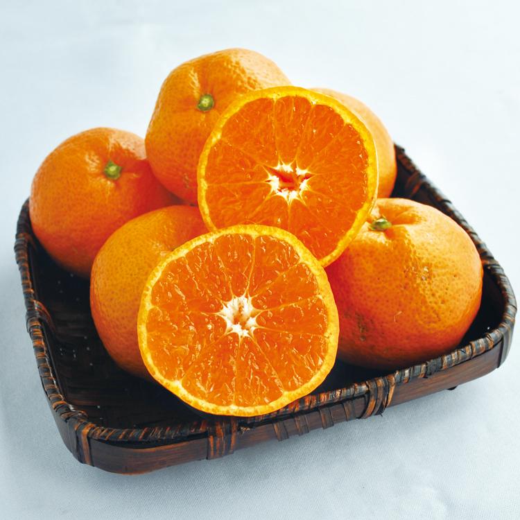 12月に成熟を迎える中生ミカンの代表的な品種「南柑20号」
