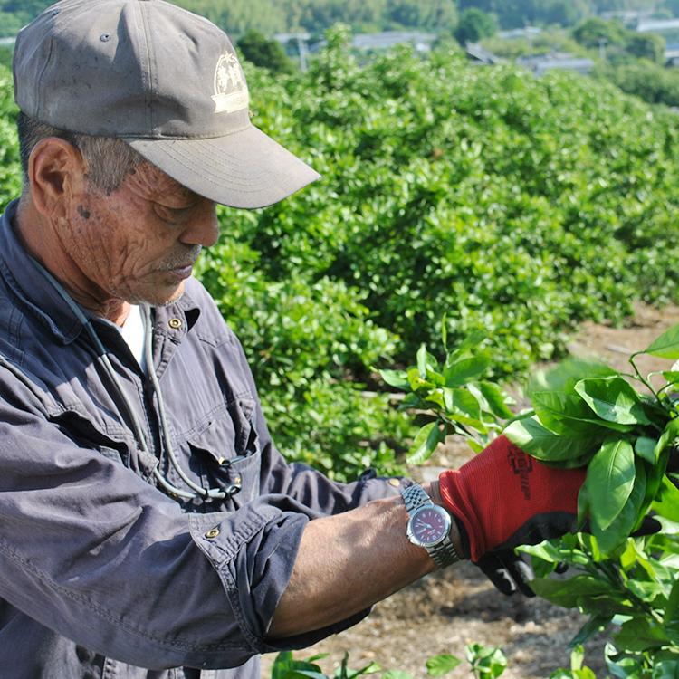 独自の栽培方法が「苗木生産」及び「柑橘栽培」で特許を取得