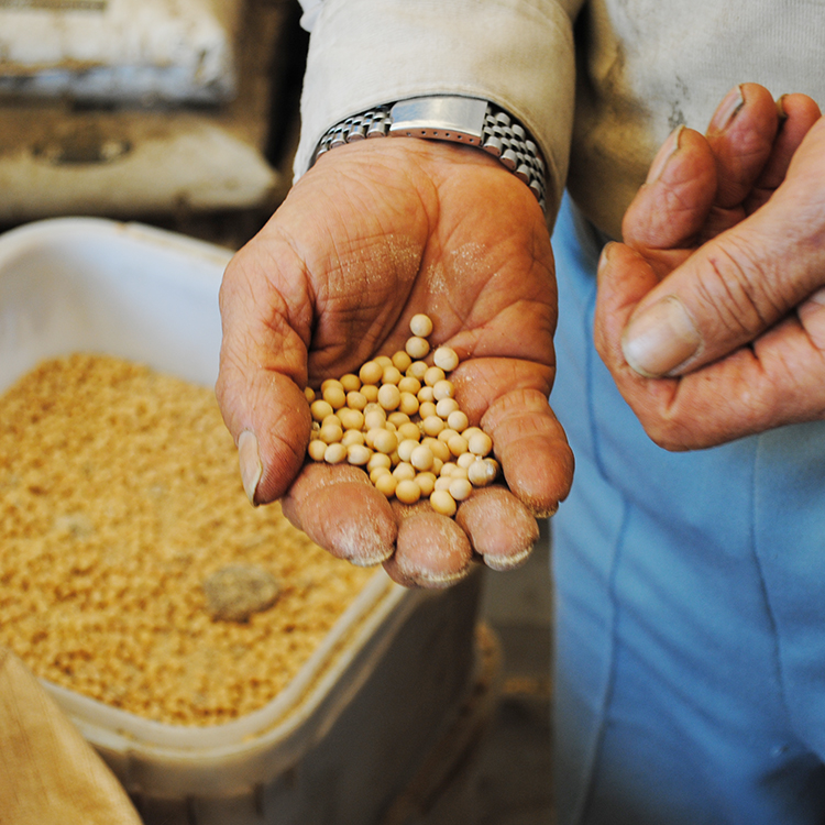 トウモロコシや大豆の実、魚粉などを使った独自の肥料を使う