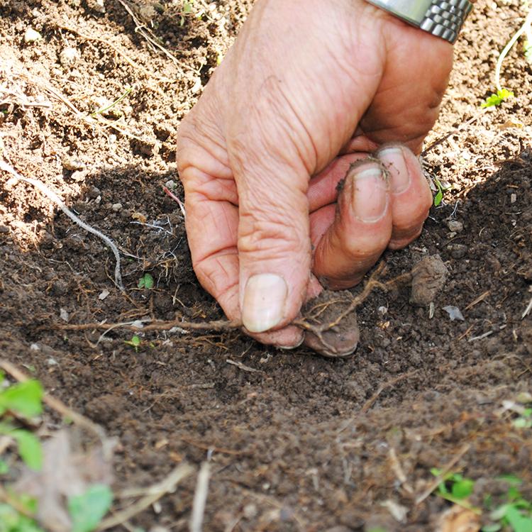 根っこの成長を見極め、水や肥料の量を調整する
