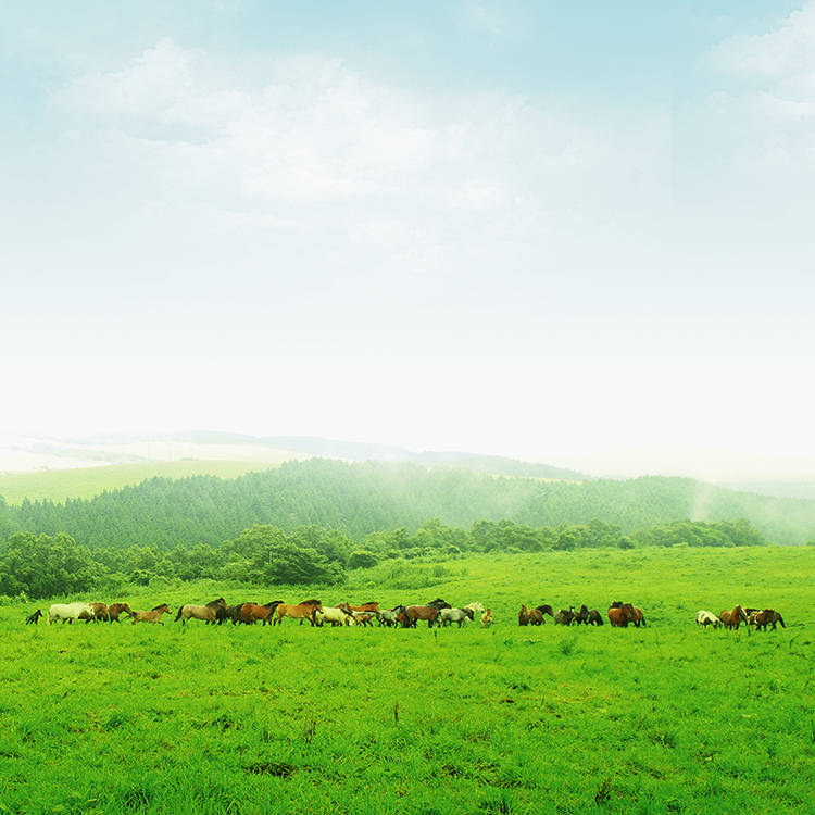 雄大な自然が広がる阿蘇にある自主ファームで肥育される