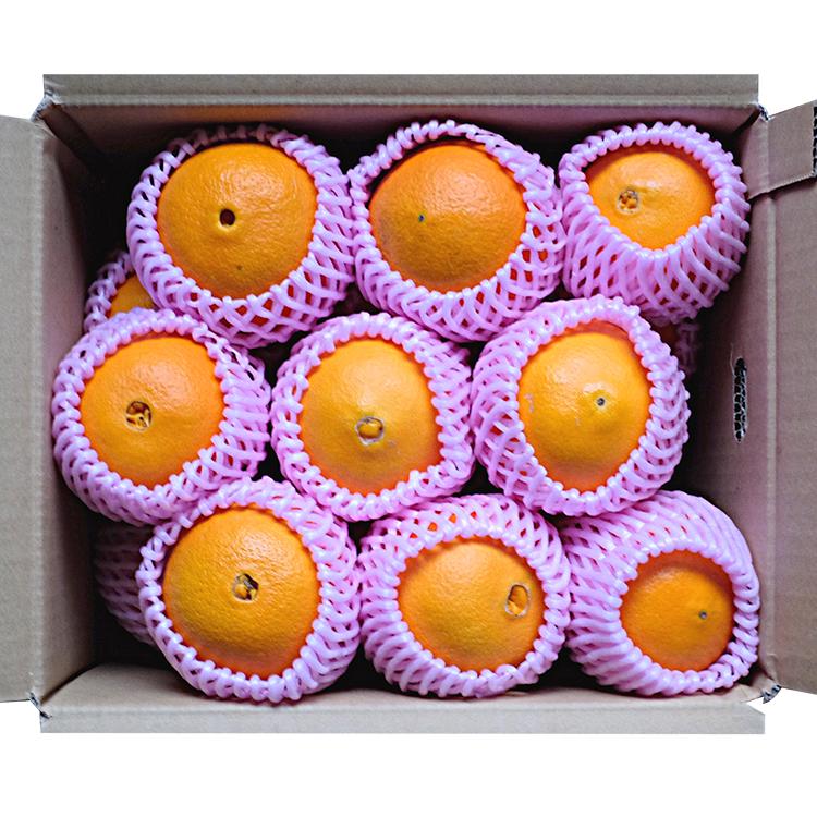 網田ネーブル(4.5kg、15~18玉、フルーツキャップ入