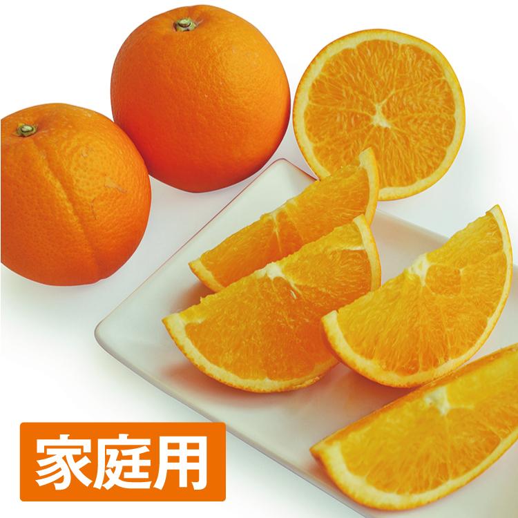【家庭用】網田ネーブル 約4.5kg