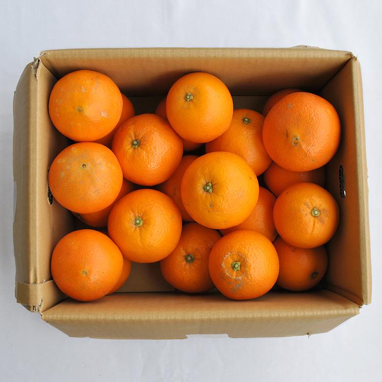 【家庭用】網田ネーブル(約4.5kg、バラ詰)