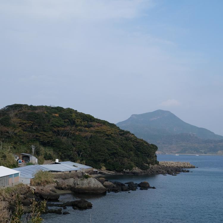 松永水産のとらふぐの養殖場(長崎県平戸市)