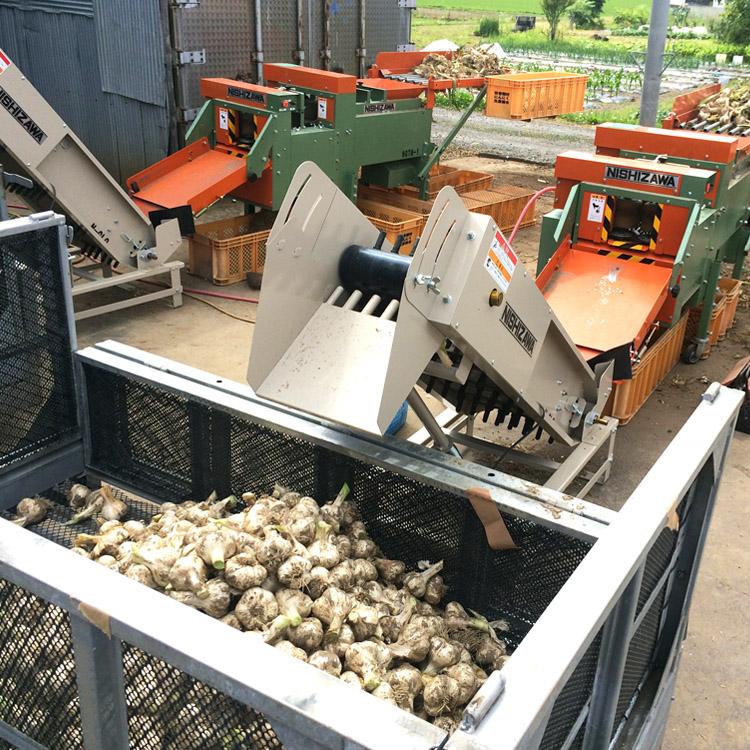 年間約40トンのにんにくを収穫
